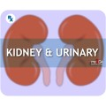 Kidney & Urinary
